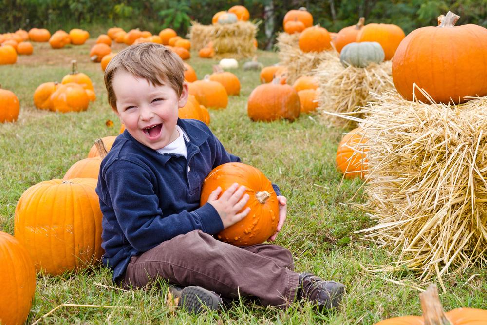 Pumpkin weight guessing contest