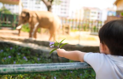 動物ゲームで遊びながら子供の英語学習をしてみよう!